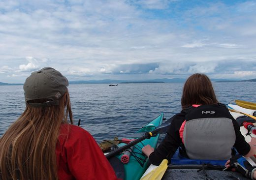 Kayakers watching an orca whale in the San Juan Islands