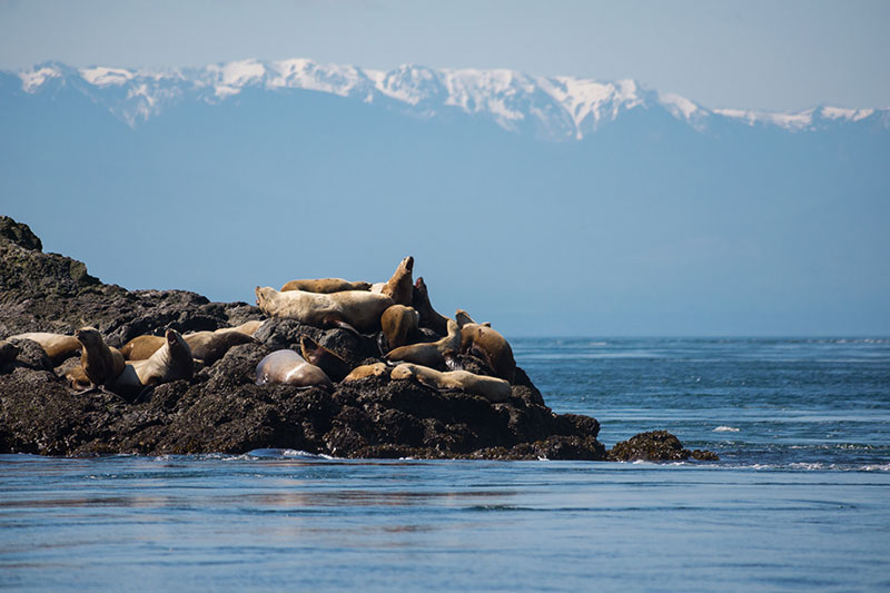 Full Day Tour To San Juan Islands From Vancouver